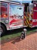Dog in front of memorial fire truck