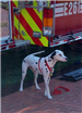 Dog standing in front of fire truck